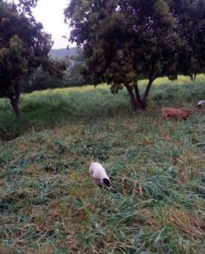 Terreno en Buin, La paloma Maipo